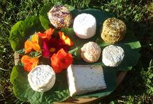 Chèvrerie de Borlon - Les fromages